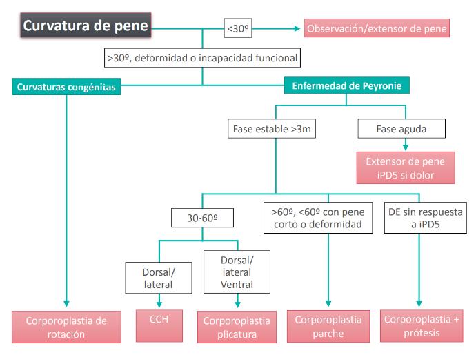 ¿ Qué es la enfermedad de Peyronie ?  ¿ Por qué se producen las curvaturas de pene?